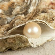 oyster-pearl-100903-02